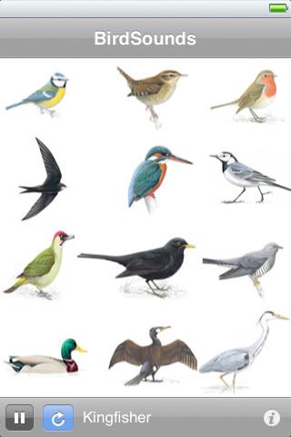 BirdSounds Lite