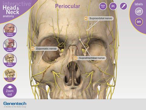 3D Facial Anatomy Tool anatomy of ear