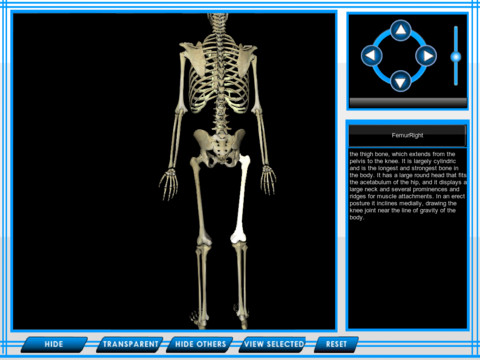 ... the human skeleton quiz the skeletal system of the human body pictures