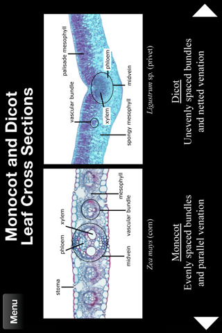 Plant Histology HD