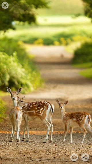 Deer HD Wallpapers - Amazing high resolution wallpapers & backgrounds wallpapers
