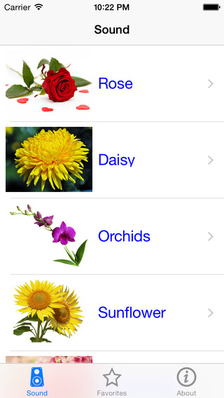 Free Flower Name In 13 Languages from Normandy Flower Online madagascar national flower