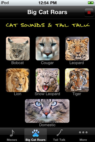 Cat Sounds & Tail Talk
