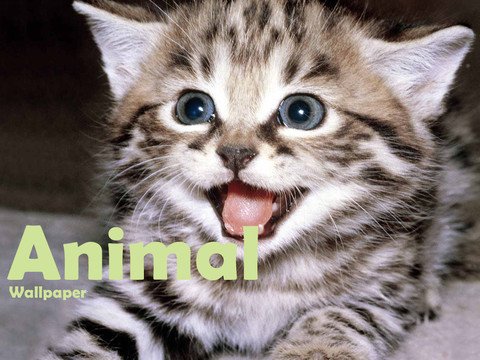 Publisher's description - Animals Wallpaper HD 1.0