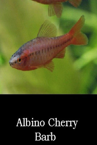 Aquarium freshwater fish app for ipad iphone photo for Common freshwater aquarium fish