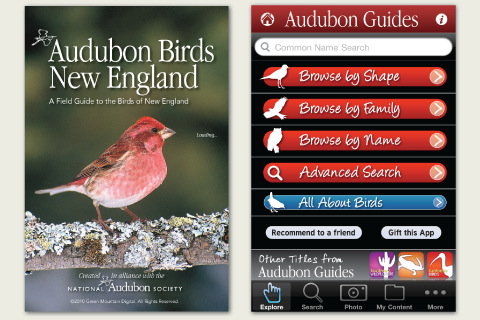 Audubon Birds New England – A Field Guide to the Birds of New England manchester england