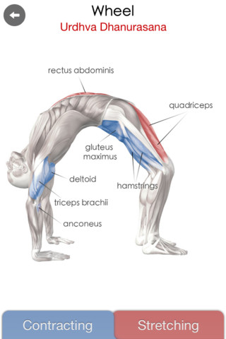 Yoga Anatomy - Learn the anatomy behind the Asanas of Hatha Yoga anatomy
