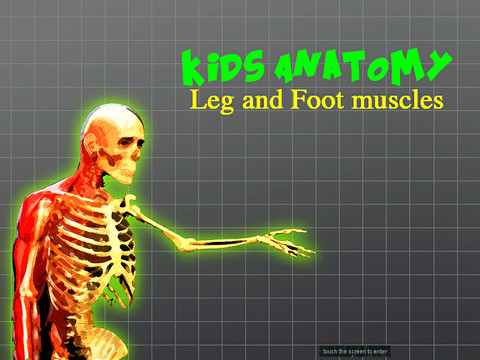 Kids Anatomy Leg and foot muscles anatomy of foot