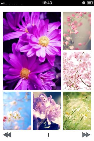 Flower Wallpapers HD: Stunning flower background madagascar national flower