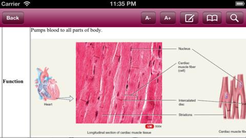 principles of anatomy and physiology medical skeletal system. Black Bedroom Furniture Sets. Home Design Ideas