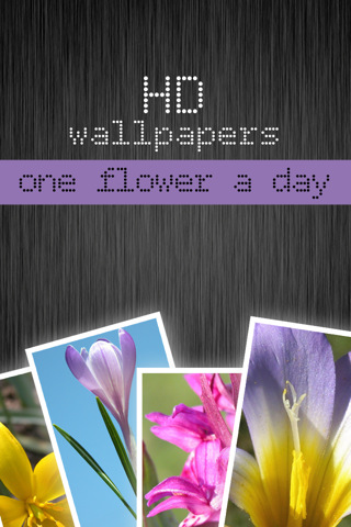 HD flower wallpapers - one flower a day (Retina display) flower tattoos