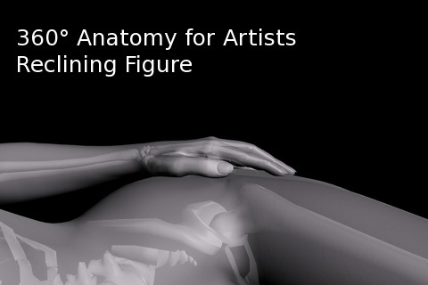 360 Anatomy for Artists - Reclining Figure anatomy of hand