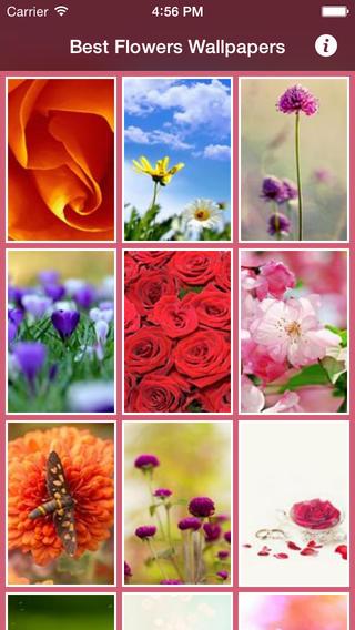 Best Flowers Wallpapers madagascar national flower