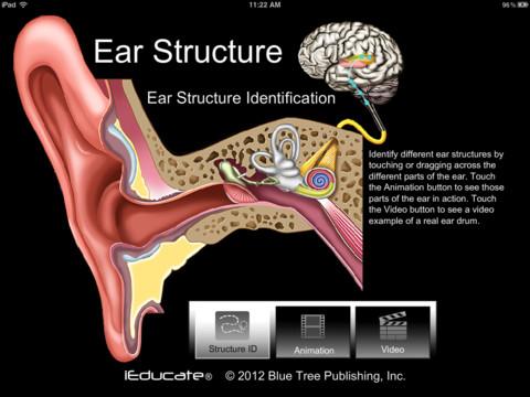 Ear ID anatomy of ear