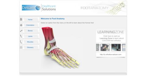 Foot Anatomy anatomy of foot