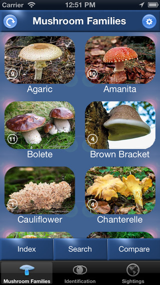 Mushroom Id North America - Fungi Identification Guide to Toadstools and Mushrooms north american mushroom gravy