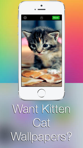 Kitten Cat Wallpapers HD - Retina Wallpapers and Backgrounds for iOS 7 wallpapers