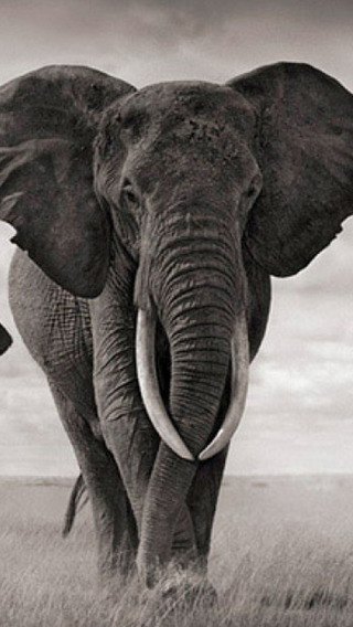 African Zoo Animals - Africa Wild Animals Adventure Pictures And Wallpapers zoo animals clipart
