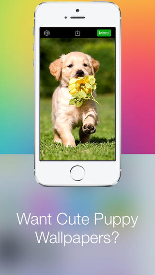 Puppy Wallpapers HD - Cute Dog Retina Wallpapers and Backgrounds for iOS 7 wallpapers