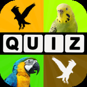 Allo! Guess the Bird Type Trivia - Bird Watching Photo Quiz
