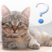 Cat Breed Quiz
