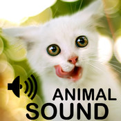 Animal Cute Sounds Collection