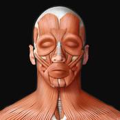 Виртуальное человеческое тело