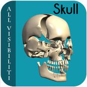 All Visibiliti Skull v1