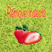 Remove insects remove all