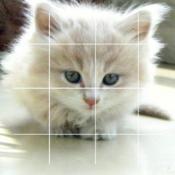 puzzles+ Cat Free