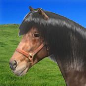 A Little Pet Horse