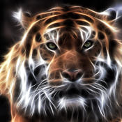 Amazing Tigers Wallpapers