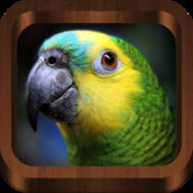 Bird Chirp : Bird Sounds, Songs, Calls & Guide - Free