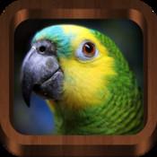 Bird Chirp : Bird Sounds, Songs, Calls & Guide - Free