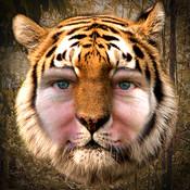 Tiger Me HD