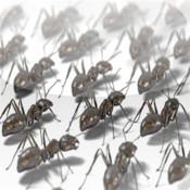 My Pet Ants red ants