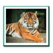 Wildlife Protection Act 1972