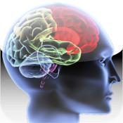 Best Brains fit brains trainer