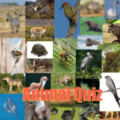 Animal Quiz® virtual animal