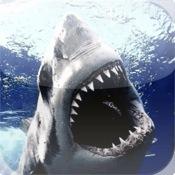 Learn Sharks!