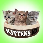 Kittens IO free kittens in minnesota