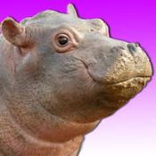 Talking Hippo