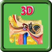 3D Human Ear_HD