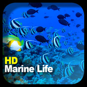 HD Marine Life marine first aid kits