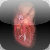Virtual Heart virginmarysacred heart picture