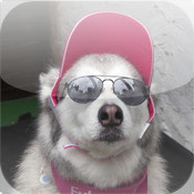 Mr. Pretty Dog