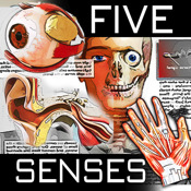 HD FIVE SENSES