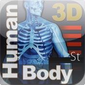 Human Body 3d St