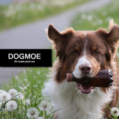 Dogmoe - ein Aussie packt aus