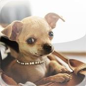 Chihuahua album